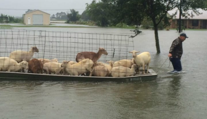 These Amazing Animal Rescue Stories Will Restore Your Faith in